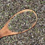 There's A Lot More THC In Hemp Seeds Than We Thought!