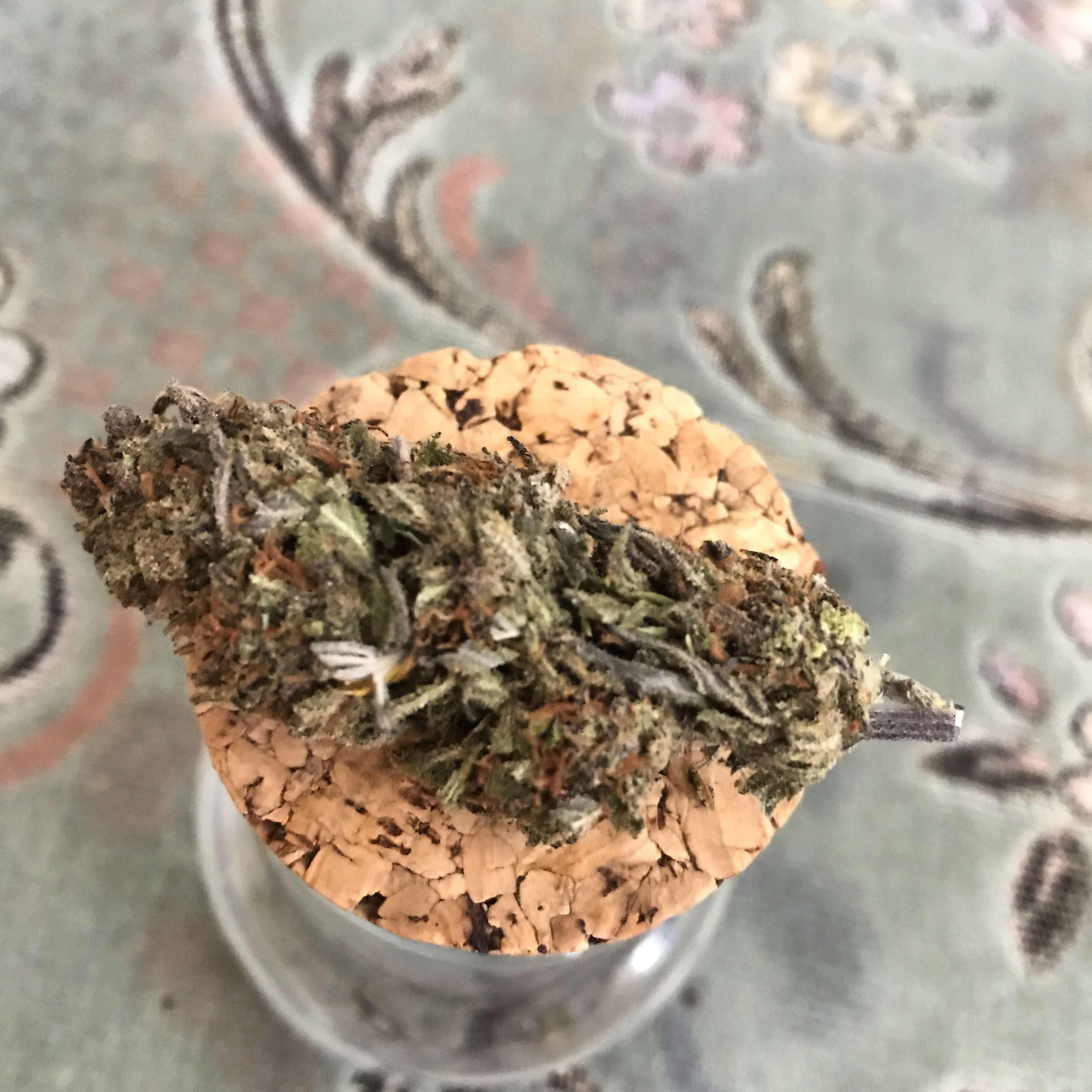 CBD Flower Strain Review: Granddaddy Purple CBD (12.3% CBD) from Kingdom of Green