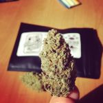 CBD Flower Strain Review: 'Bonnie's Cookies #2' From The Brain Box Shop