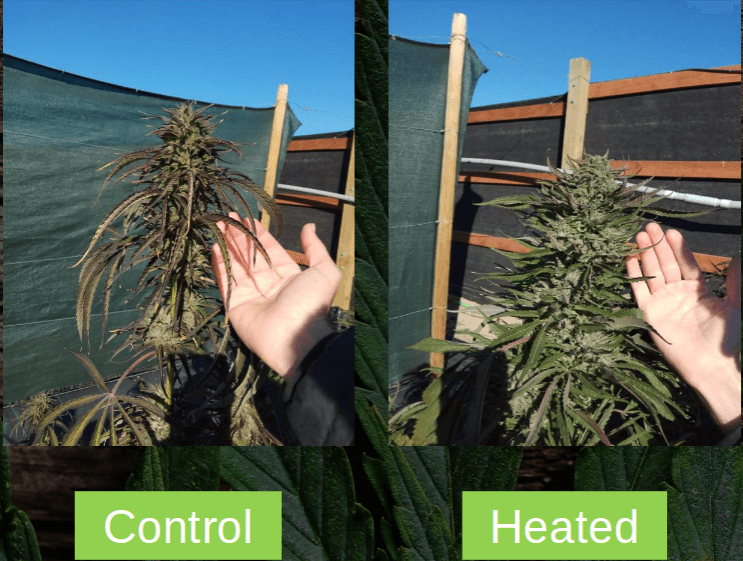 Genius New Growing Technique Increases Cannabis Yields By More Than 200%!