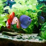 How To Grow Cannabis Using Aquaponics: The Fishy Future Of Growing Great Weed